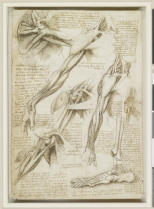 Leonardo Da VinciThe muscles of the shoulder and arm
