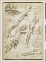 Leonardo Da VinciThe muscles of the shoulder and arm