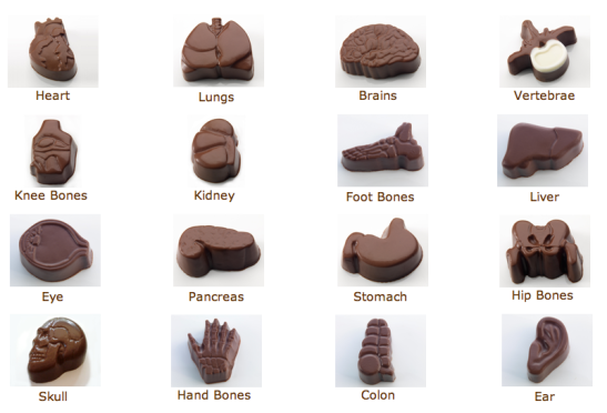 anatomical chocolates_2